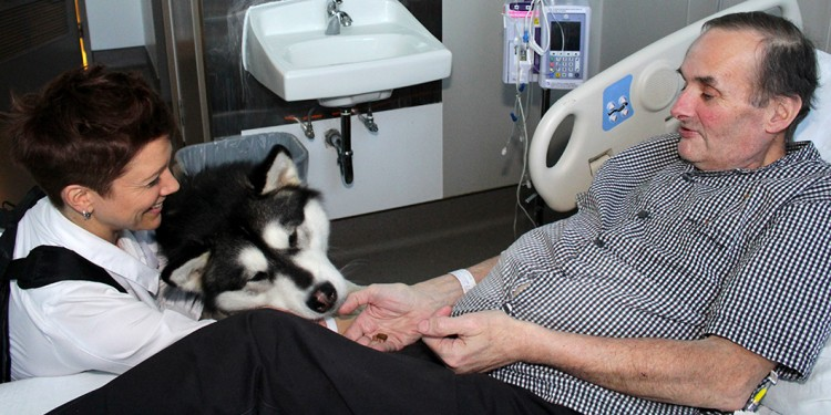 Richard Auclair, a geriatrics patient at the JGH, gives a treat to Zodiak, a pet therapy dog that is accompanied by its owner, Véronique Binette.
